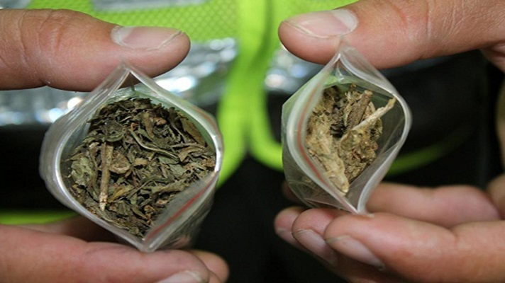 La plenaria de la Cámara de Representantes en Colombia, negó el proyecto de ley que establecía el consumo de marihuana en la forma de uso recreativo para mayores de edad.