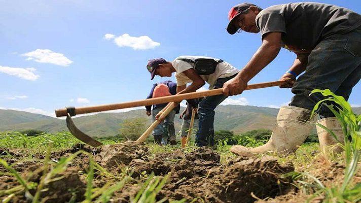 Por primera vez en 50 años, Venezuela llega al mes de mayo sin un plan nacional de siembra. La denuncia la hizo Edison Arciniega, director de la ONG Ciudadanía en Acción.