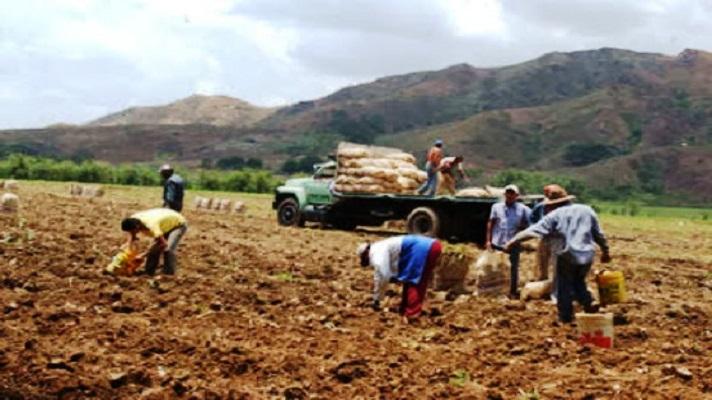 Luis Prado, vicepresidente de la Federación Nacional de Ganaderos de Venezuela (Fedenaga), alertó que la producción del campo corre peligro. La razón es la falta sostenida de gasoil que afecta entre 70% y 80% de los equipos para las labores del sector. Esto representa un riesgo en el abastecimiento de los principales rubros alimenticios.