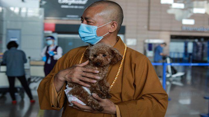 un-templo-budista-de-amor-canino-el-monje-chino-que-salvo-a-8-000-perros-callejeros