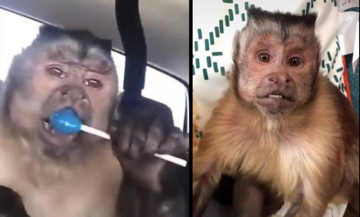 Ádios al mono Geoorce celebridad en redes sociales