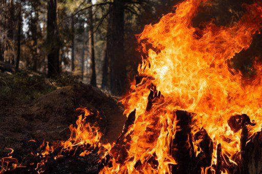 arden los bosques